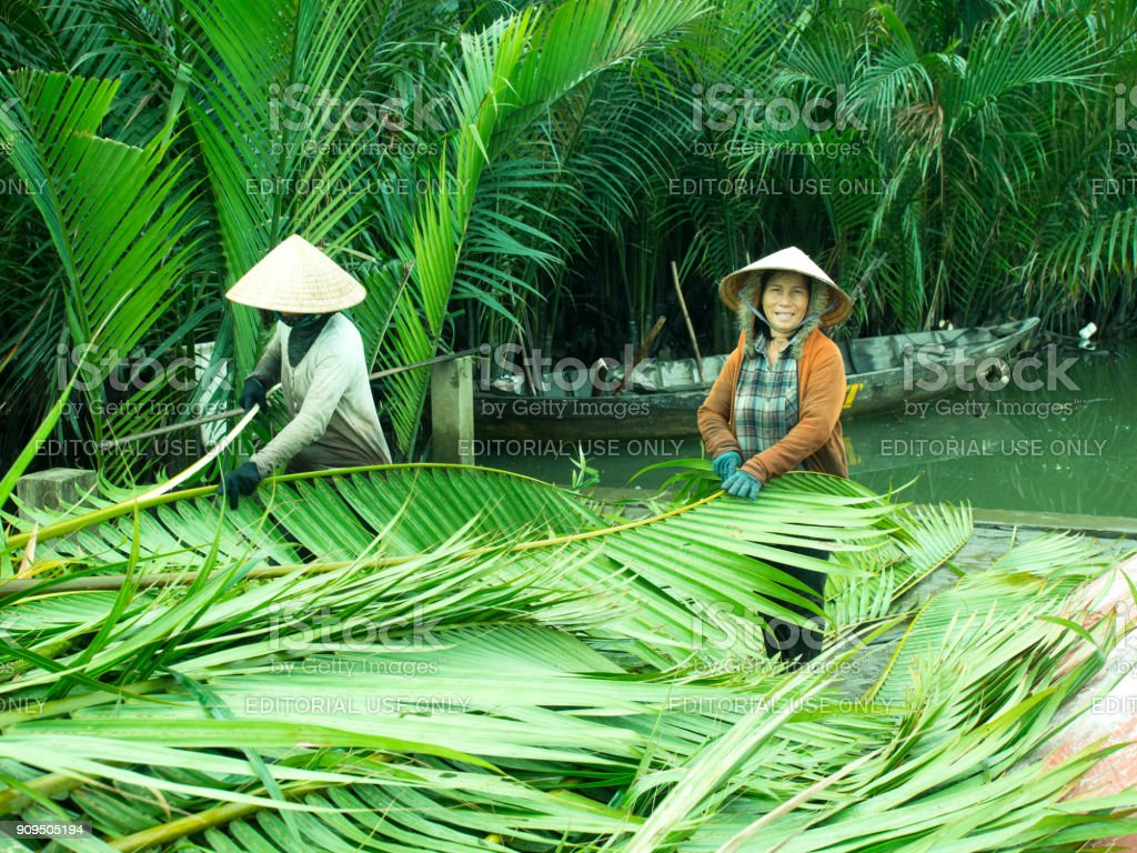 Adult Vietnamese woman in a traditional conical hat is engaged in the preparation of leaves on a coconut plantation stock photo