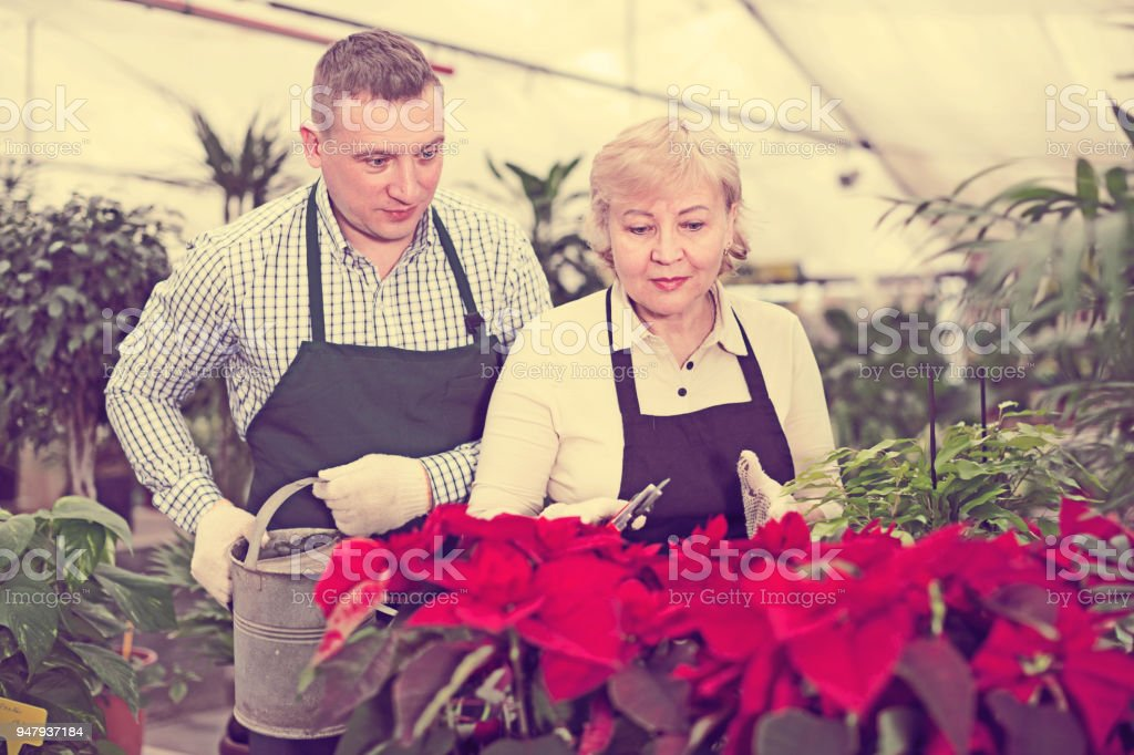 Adult woman and man are watered flowers and try secateurs together stock photo