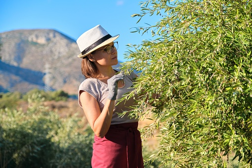 628409126 istock photo Adult woman holds in her hand branch with an olive tree 1253437945