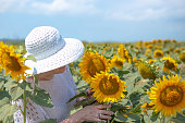 an adult woman in a white hat on the field takes a sunflower flower in her hands, looks at it. Rural life in the summer in the village. Growing seeds for the production of vegetable oil.