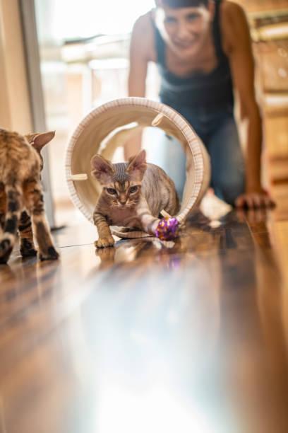 Adult woman pet owner enjoying watching her playful kittens stock picture id1220654198?b=1&k=6&m=1220654198&s=612x612&w=0&h=pxluw8he 8vc0rrudxrl4wjfoighbfdtsjlqx3clna8=