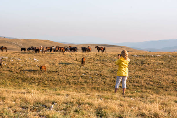 Erwachsene Frau fotografiert wilde Pferde in der Natur mit einem Handy – Foto