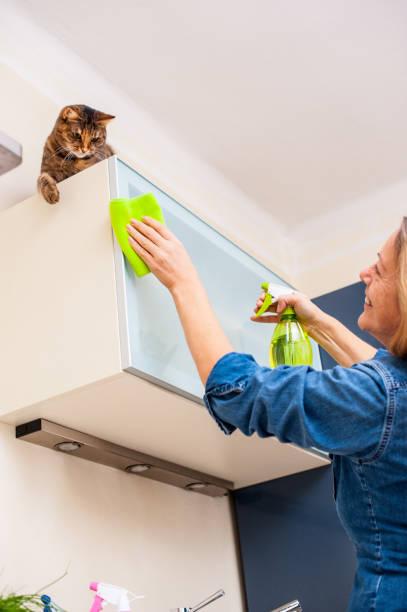erwachsene frau spielt mit katze beim putzen der küche - katzenschrank stock-fotos und bilder