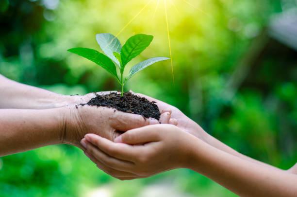vuxna baby hand träd miljö jorden dag i händerna på träd som växer plantor. bokeh grön bakgrund kvinnliga handen håller trädet på naturen åkergräs skogens bevarande begrepp - miljö bildbanksfoton och bilder