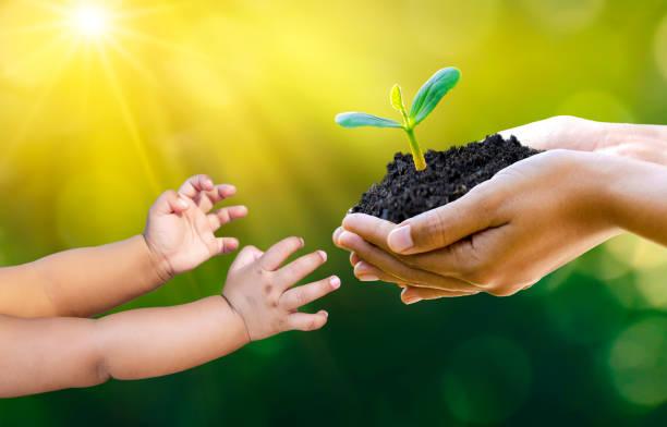 大人赤ちゃんハンドツリー環境地球の日苗を育てる木の手で。ボケグリーン背景 自然野草森林保全コンセプト上の木を保持する女性の手 - sustainability ストックフォトと画像