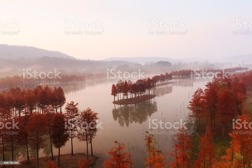 Advection Fog Morning stock photo