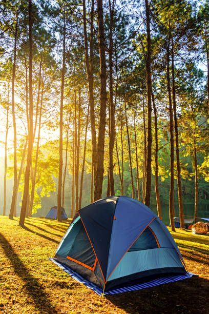 adventures camping and tent under the pine forest near water outdoor in morning and sunset at pang-ung, pine forest park , mae hong son, - camping imagens e fotografias de stock