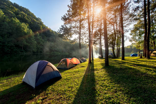 adventures camping and tent under the pine forest near water outdoor in morning and sunset at pang-ung, pine forest park , - camping imagens e fotografias de stock