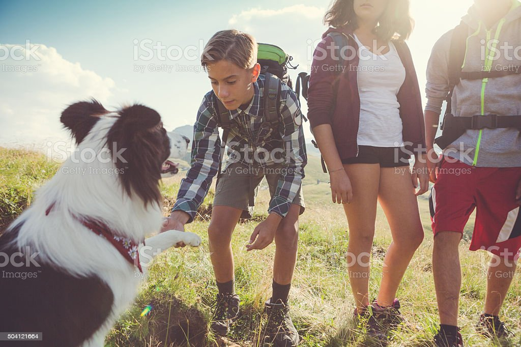Adventures on the Dolomites with dog royalty-free stock photo