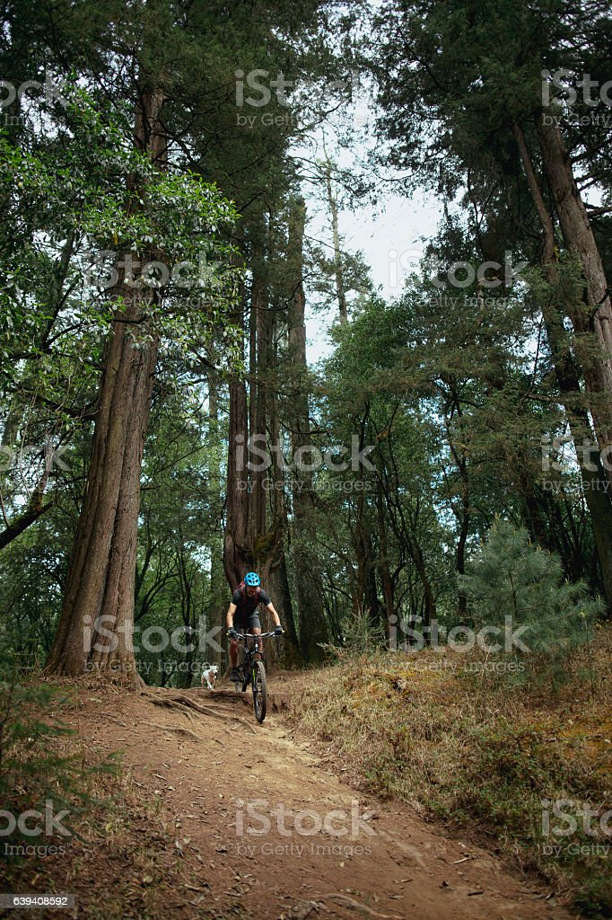 Adventurous latin man cycling down a hill in the forest - foto de stock