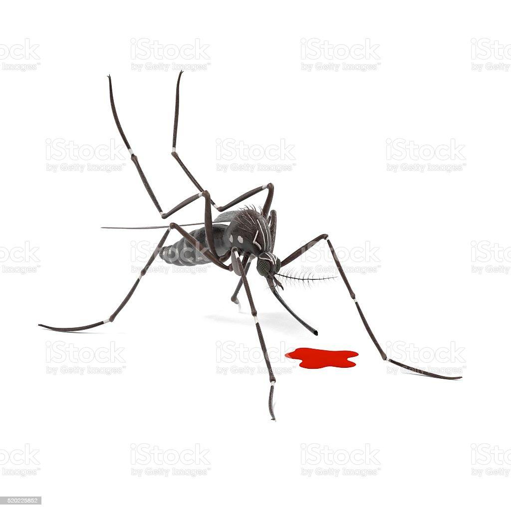 Stechmücke Stock-Fotografie und mehr Bilder von Aedes-Mücke   iStock