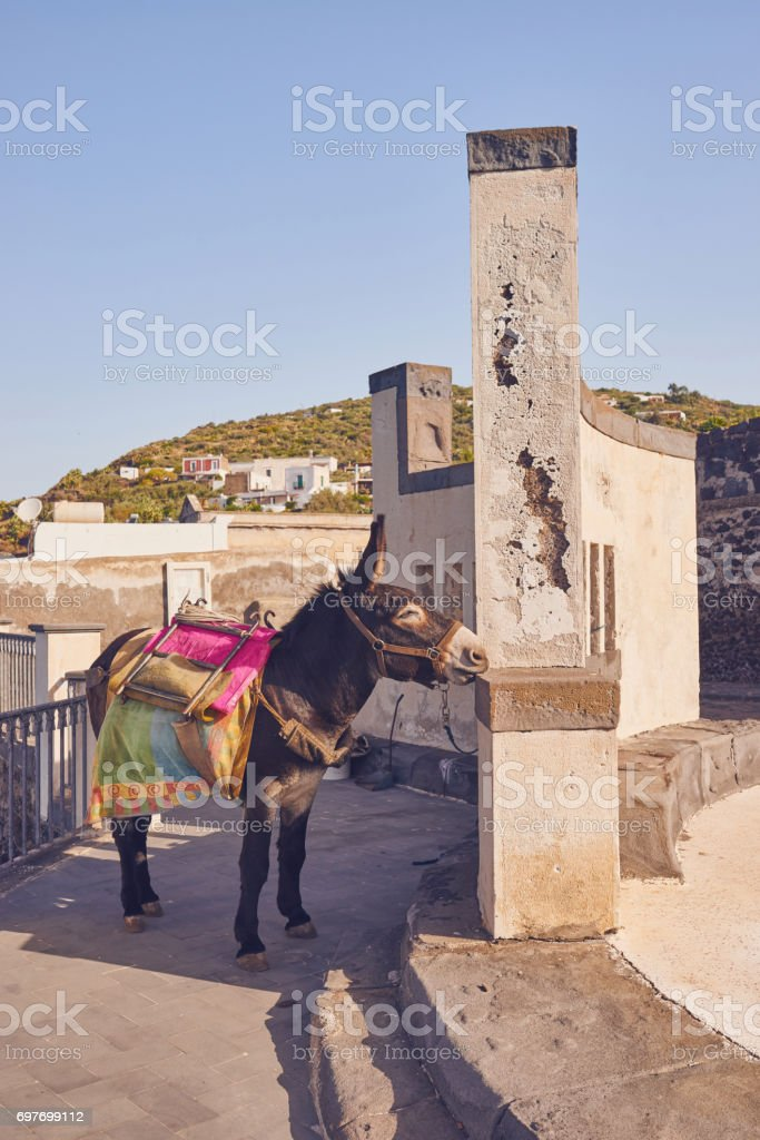 Aeolian Islands - Ginostra - Sicily - Donkey used to luggage stock photo