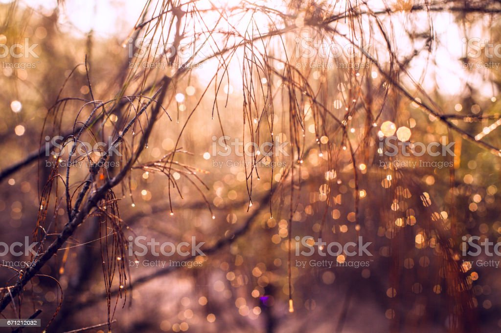 Aeolian tree. Tree branches at dawn stock photo