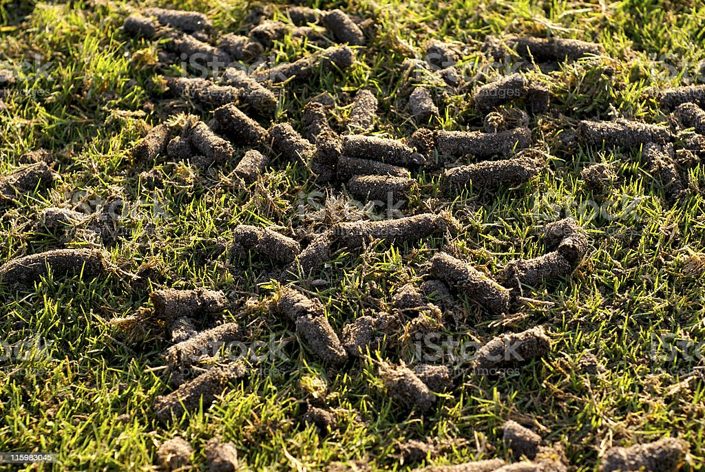 Aerated lawn stock photo