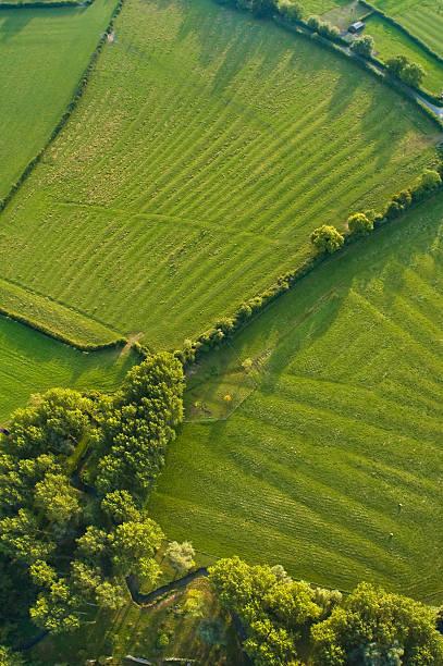 aerial abstrakt, woodland und der pasture - baumgruppe stock-fotos und bilder