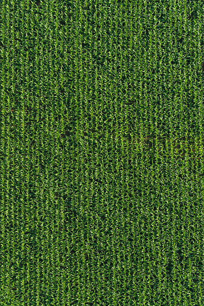 Best Corn Field Aerial Stock Photos, Pictures & Royalty