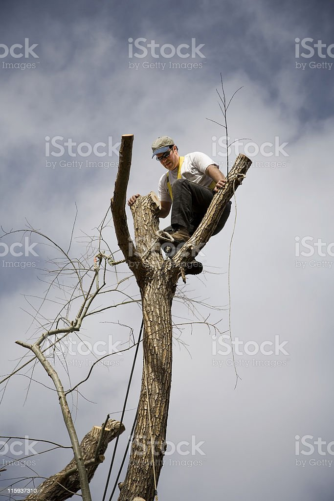 Aerial Arborist at Work royalty-free stock photo