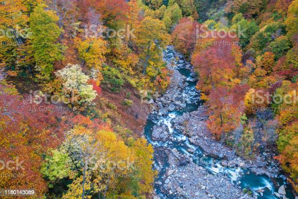Photo of Aerial Autumn Forest River Japan
