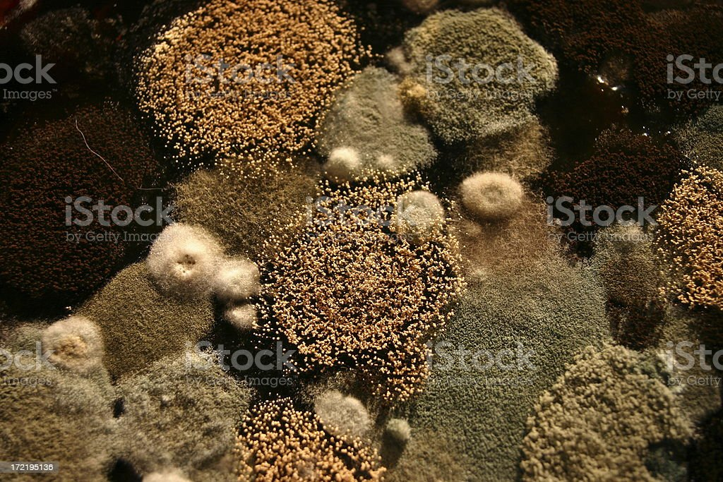 Aerial closeup view of mold on top coffee royalty-free stock photo