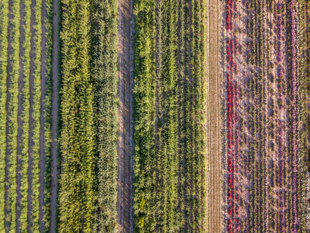 Aerial drone image of fields with diverse crop growth picture id1164518436?b=1&k=6&m=1164518436&s=612x612&w=0&h=iv8rnpjyitjcyocvnvdvxf5m0lb327ifo9 0xzi2uyy=
