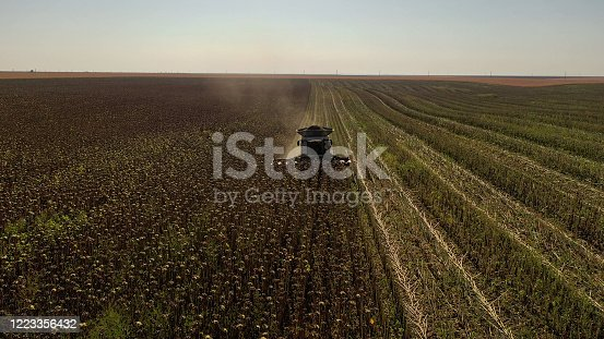 Aerial drone photograph showing industrial machine harvesting sunflower crops. Severe drought conditions affecting the crop fields.