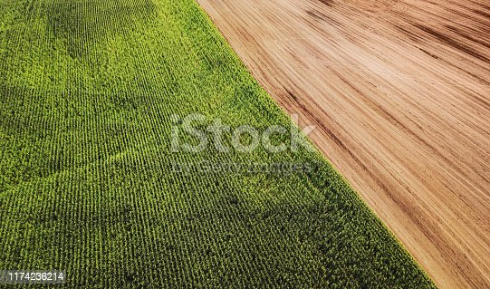 Aerial drone view of mature corn crop.