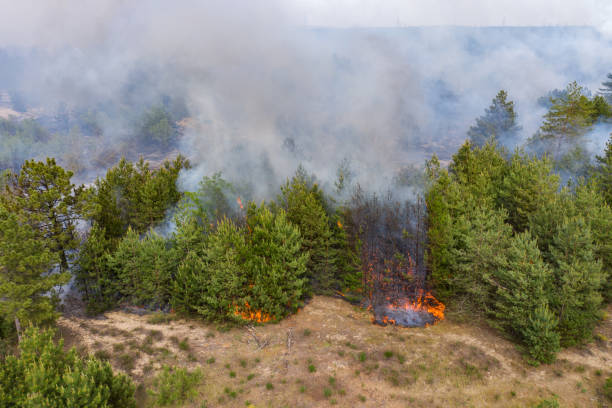 Aerial drone view of a wildfire in forested area