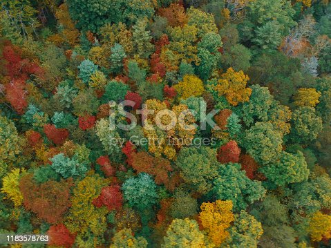 Aerial Drone view of Autumn / fall in the Blue ridge of the Appalachian Mountains near Asheville, North Carolina. Vibrant red, yellow, orange leaf foliage colors from above.