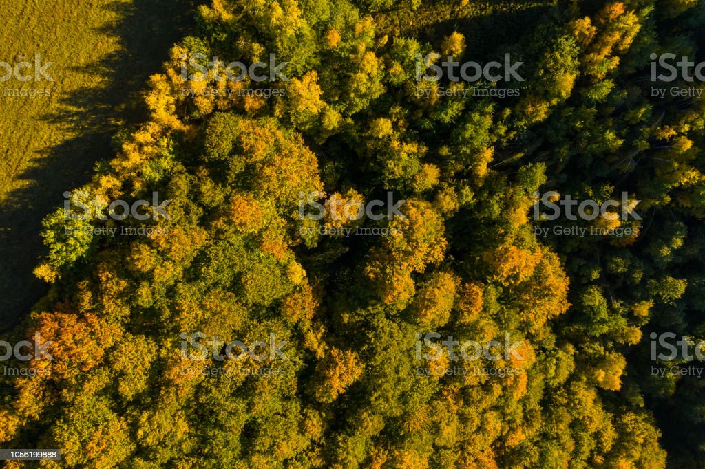 Aerial drone view of autumn forest in sunset lights