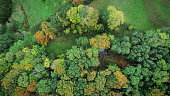 Aerial drone view of colorful autumn forest