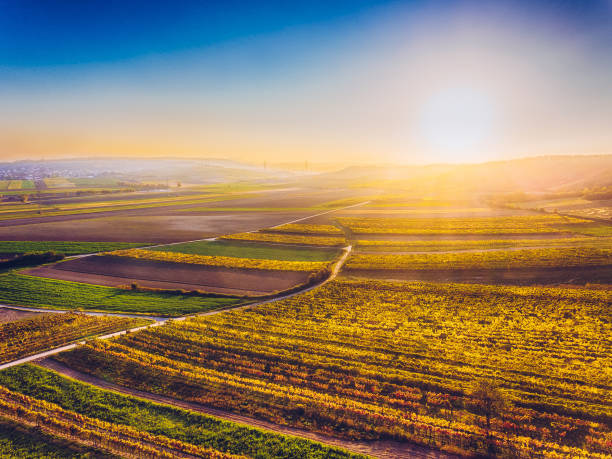 Aerial drone view of colorful vineyards fields stock photo