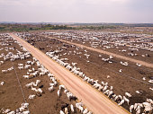 Concept of agriculture, environment, ecology, economy, exportation and meat production.