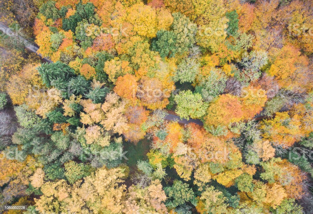 Aerial drone view of stunning colorful autumn fall forest