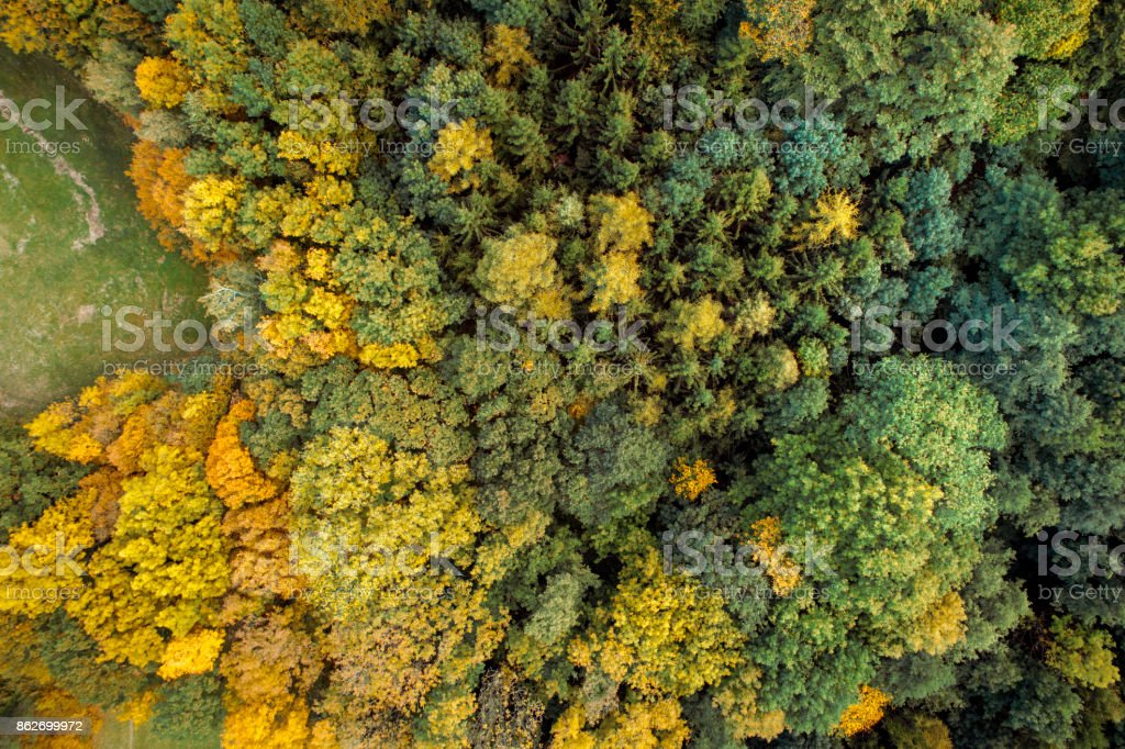 Aerial drone view of colorful, wonderful, amazing, autumn forest,...