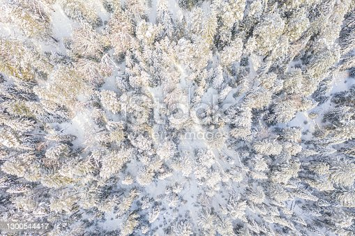 istock Aerial drone view of the forest in winter. Winter landscape with fir trees in snow from above 1300544417