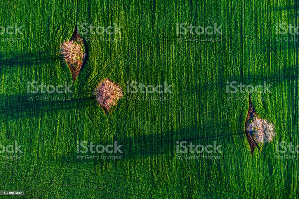 Aerial drone view over agricultural fields and blooming trees with their shadows. stock photo