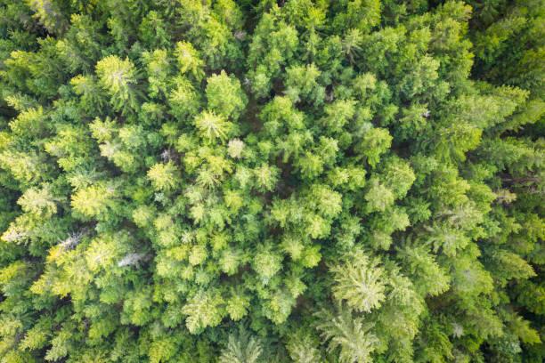 Luftdrohnenansicht zu grünem Baumaufstein im Frühjahr – Foto
