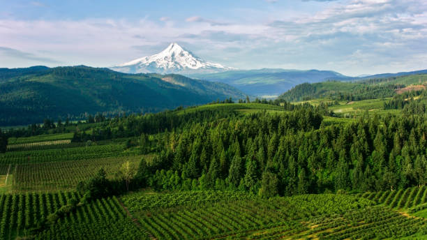 Aerial Farmland with beautiful view of the Mount Hood Aerial shot of agricultural land with Mount Hood seen in distance with its snowcapped peak in Oregon, USA. mt hood stock pictures, royalty-free photos & images