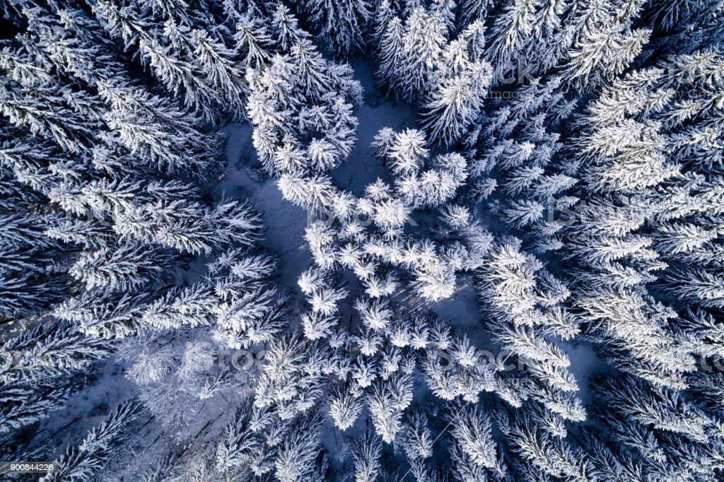 Aerial Flug mit Drohne über Nadelwald im Winter in Österreich in salzburg – Foto