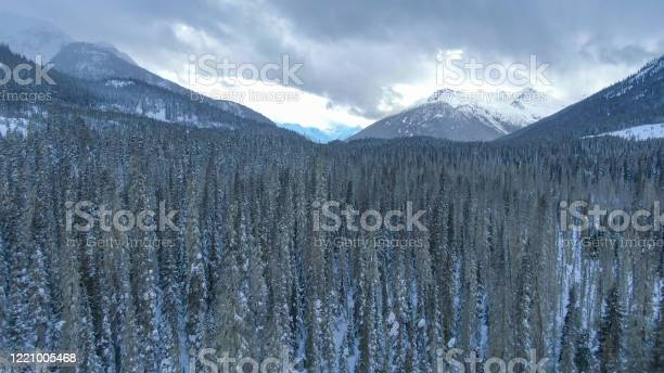 Photo of aerial: flying over a massive snowy coniferous forest on a cloudy winter day.