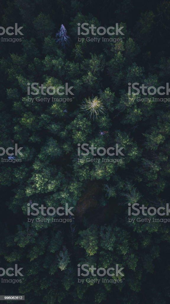 Aerial skog - Royaltyfri Abstrakt Bildbanksbilder