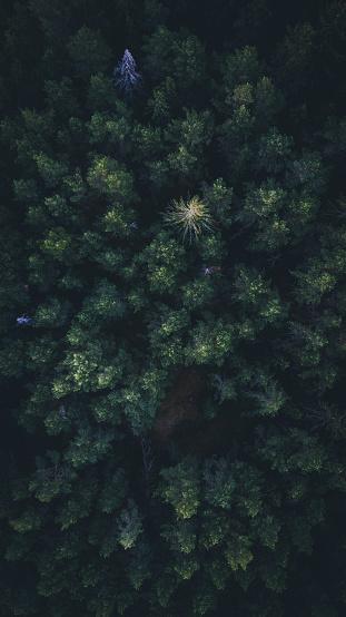 Aerial Skog-foton och fler bilder på Abstrakt