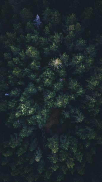 aerial skog - pine forest sweden bildbanksfoton och bilder