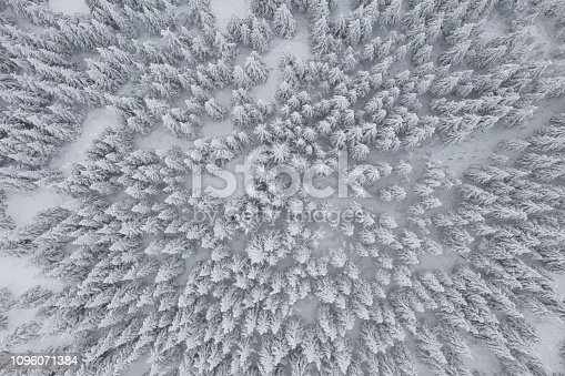 1141614053 istock photo Aerial forest view in cold season 1096071384