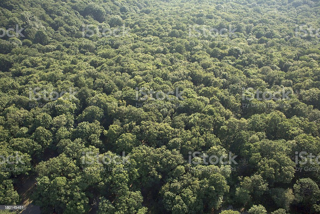 aerial forest view royalty-free stock photo