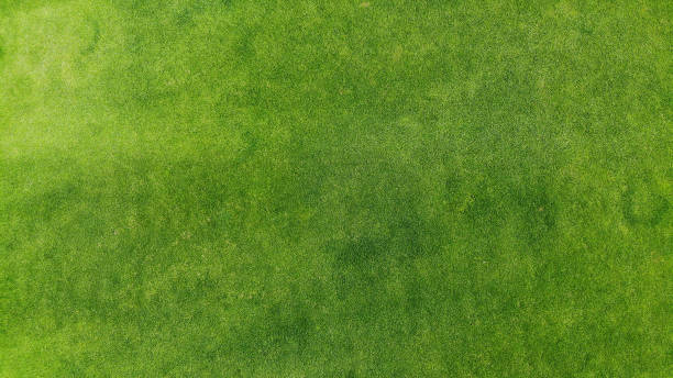 aerial. green grass texture background. top view from drone. - erva imagens e fotografias de stock