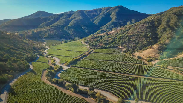 aerial image of vina vik in chile. - valley stock pictures, royalty-free photos & images