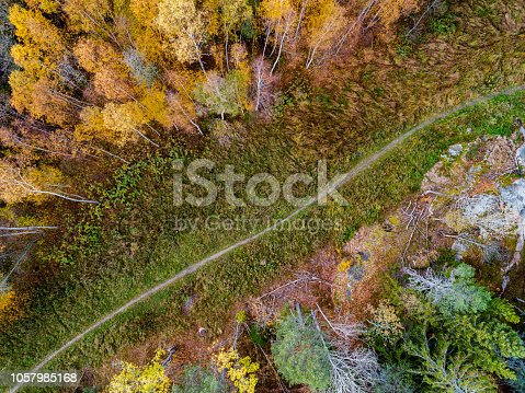 Aerial landscape of a footpath in a forest