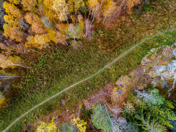 Aerial landscape of a footpath in a forest stock photo