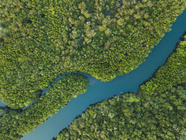 Luftlandschaft des verwinkelten Flusses im Wald von Drohne – Foto